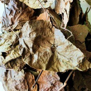 plusieures feuilles djeka